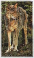 Parco Nazionale del Gran Sasso d'Italia fauna