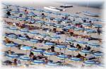Cinque stabilimenti balneari sono a disposizione di chi sceglie per le sue vacanze il piacevole litorale di Roseto degli Abruzzi